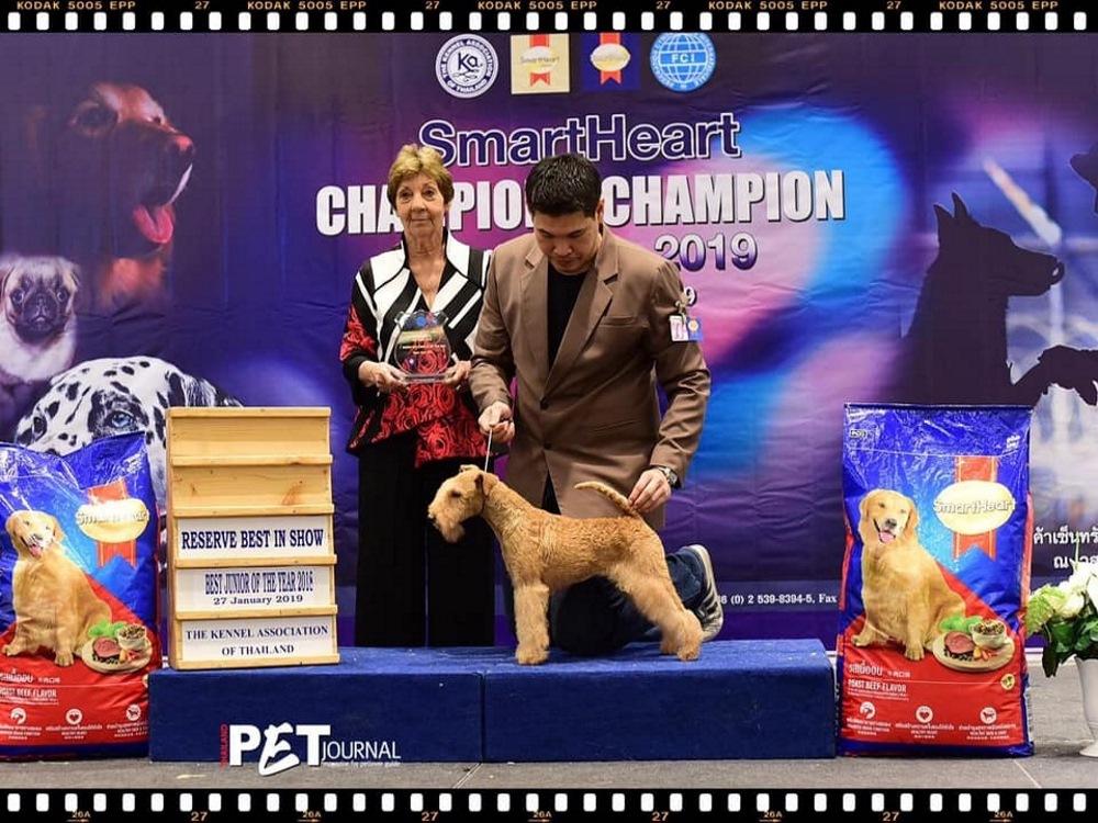 Champion of Champion Dog Show 27012019