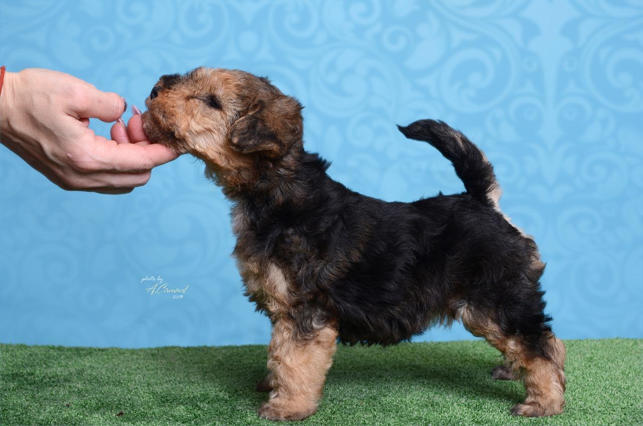 puppy 15122018