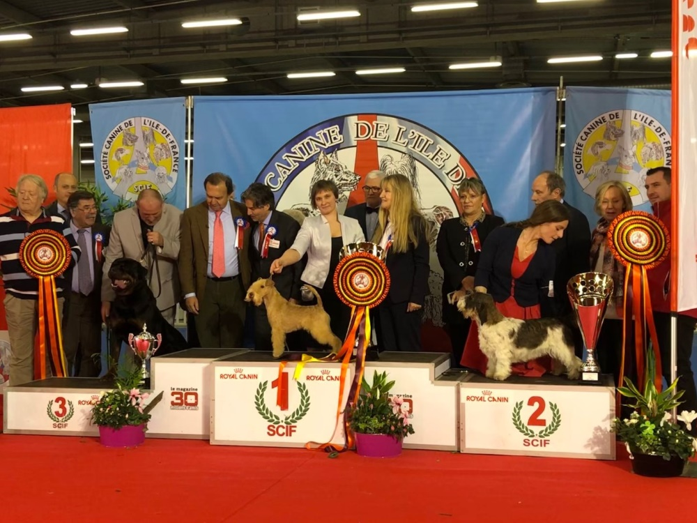 International Dog Show in Paris