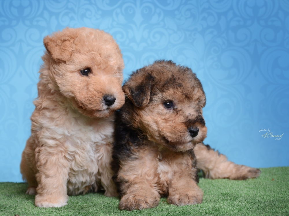 puppies 15122018 small