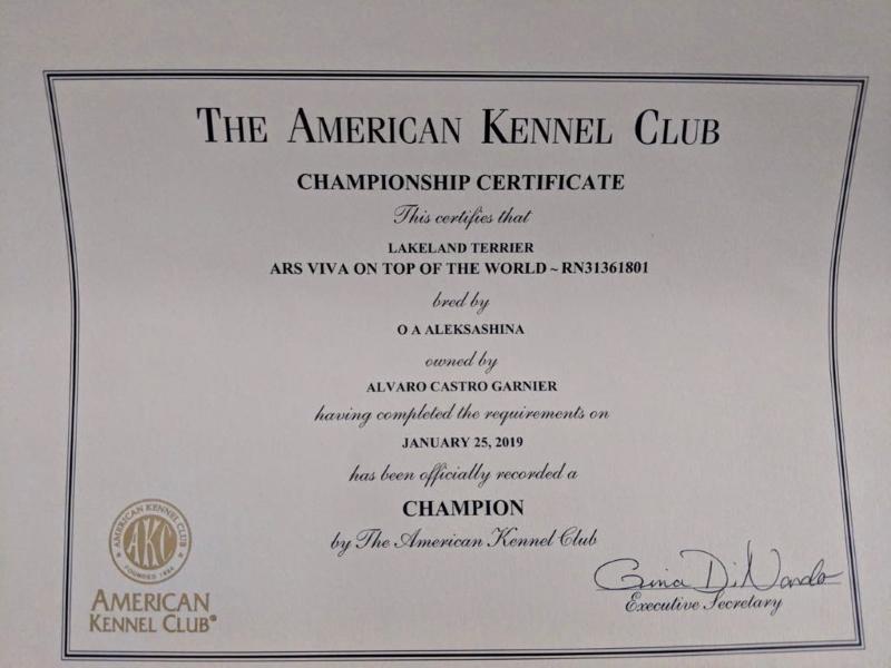 American Champion
