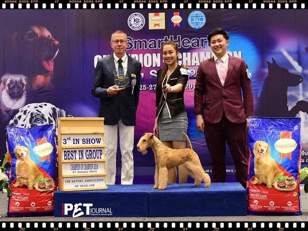 Champion of Champion Dog Show